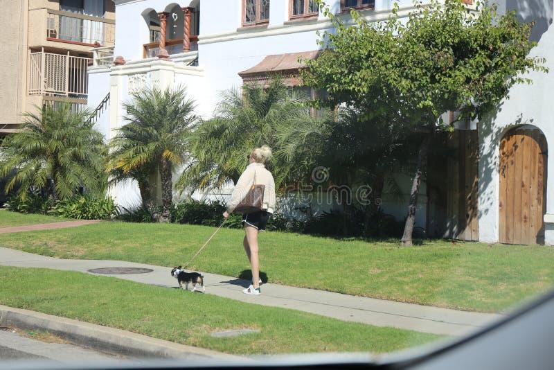 O caráter fêmea anda o cachorrinho através de Beverly Hills imagem de stock royalty free