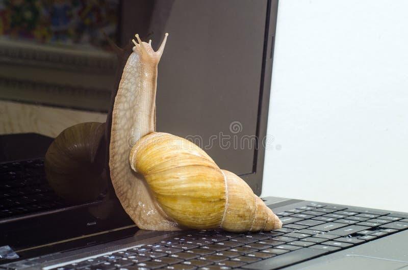 O caracol e o portátil fotografia de stock royalty free