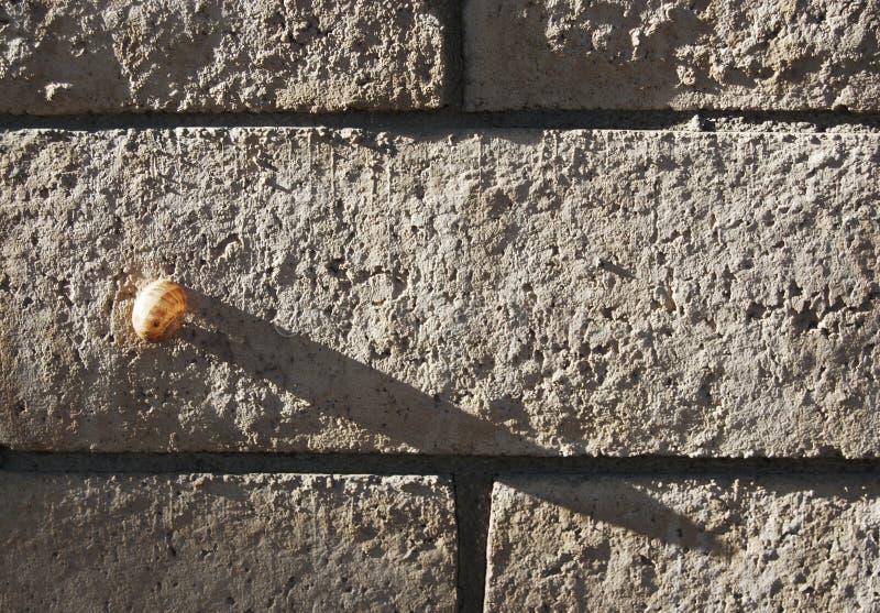 O caracol pequeno molda uma sombra grande imagem de stock