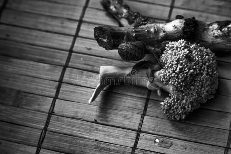 O caracol que senta-se em pouco tronco de árvore e vai esverdear brócolis, contexto de bambu de madeira, fundo do animal do close imagens de stock