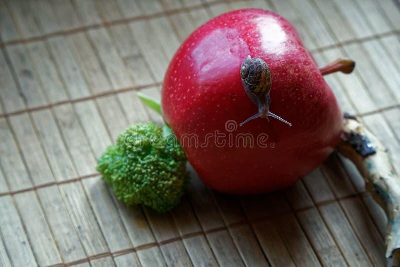 O caracol que senta-se no tronco vermelho da maçã e de árvore e vai esverdear brócolis, contexto de bambu de madeira, fundo do an imagem de stock
