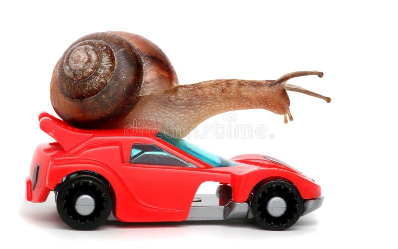 O caracol rápido gosta do piloto do carro Conceito da velocidade e do sucesso As rodas são borrão devido a mover-se Fundo branco  fotos de stock