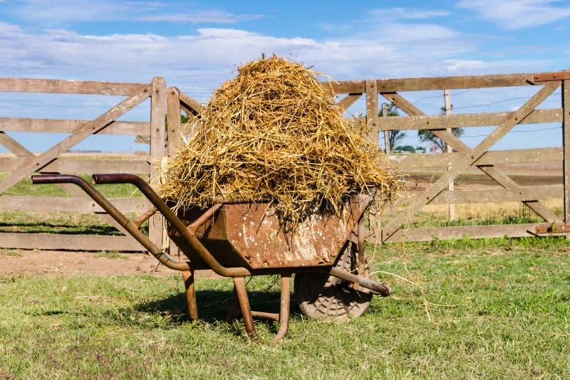 O carrinho de mão carregado com a alfafa no campo fotografia de stock