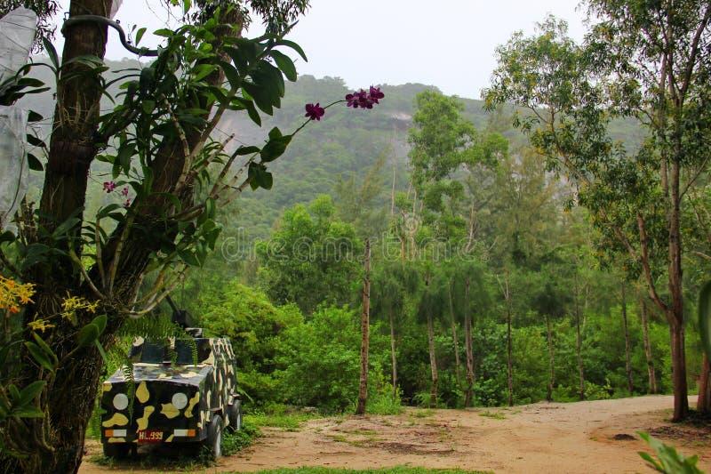 o carro é pintado uma cor caqui na selva vietnamiana imagem de stock