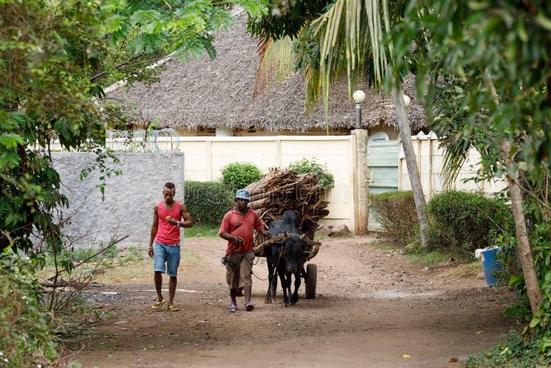 O carro malgaxe do boi da equitação do fazendeiro em intrometido seja, Madagáscar foto de stock royalty free