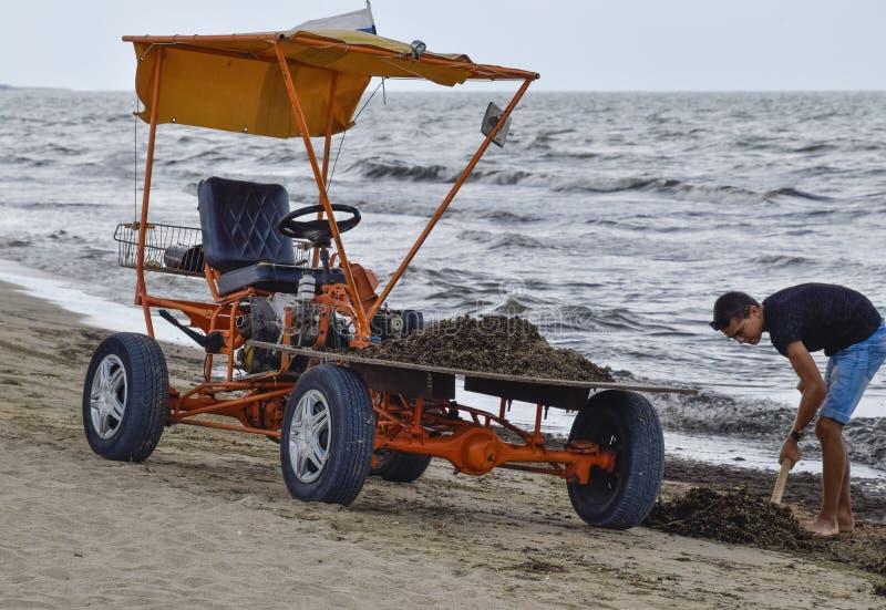 O carro para a recolha de lixo da praia Limpando na praia, na praia limpa da lama e no desperdício fotos de stock
