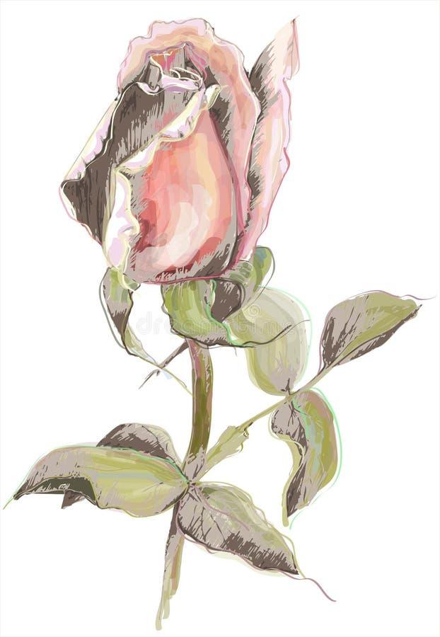 O cartão com levantou-se Rosas da ilustração Decorati bonito ilustração do vetor