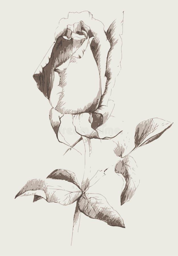 O cartão com levantou-se Rosas da ilustração Flores da ilustração ilustração do vetor