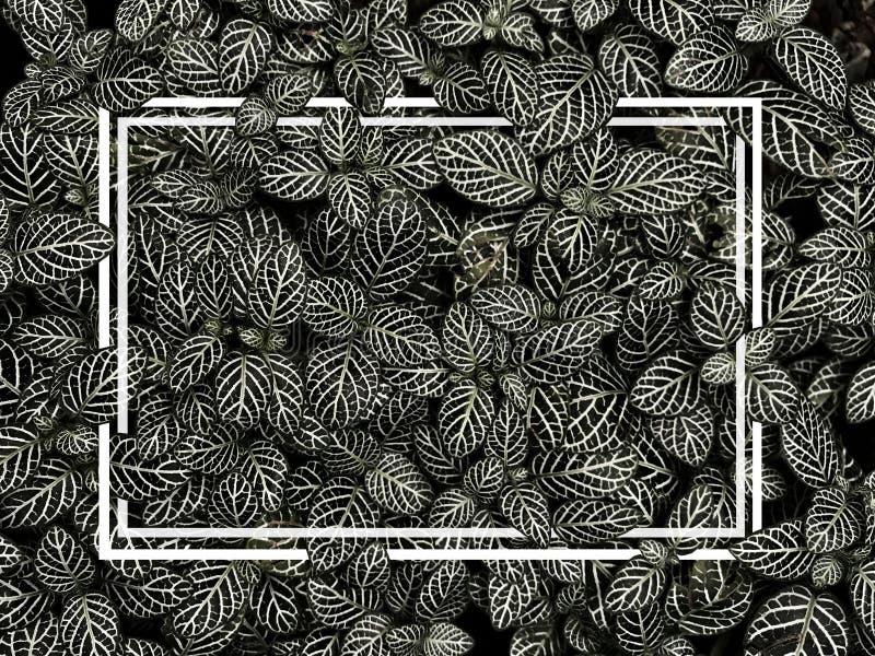 O cartão criativo da disposição feito das folhas preto e branco tem a linha quadro foto de stock