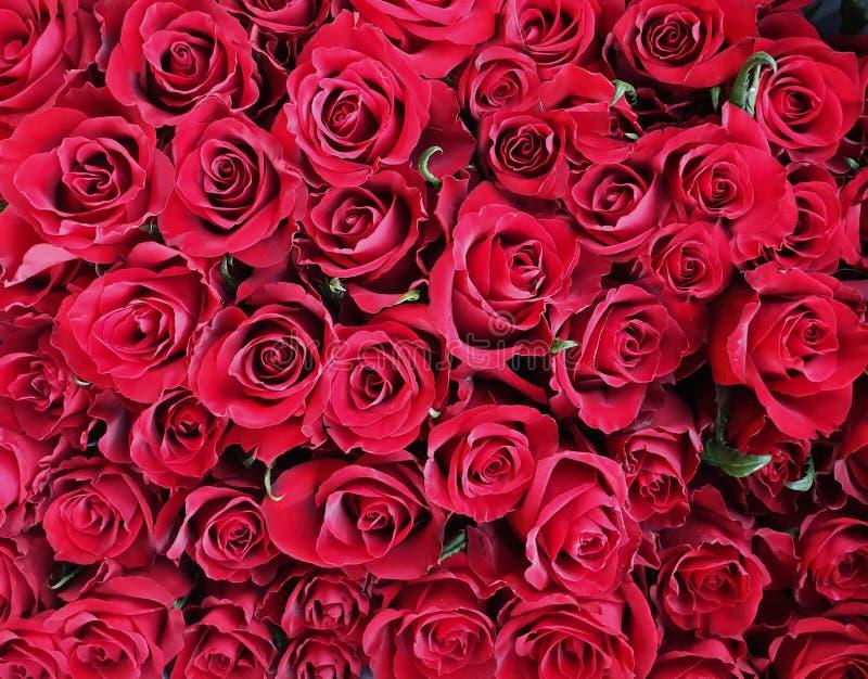 O cartão de cumprimentos chique do ramalhete das rosas vermelhas para cumprimentos do aniversário do Valentim do dia das mulheres imagens de stock