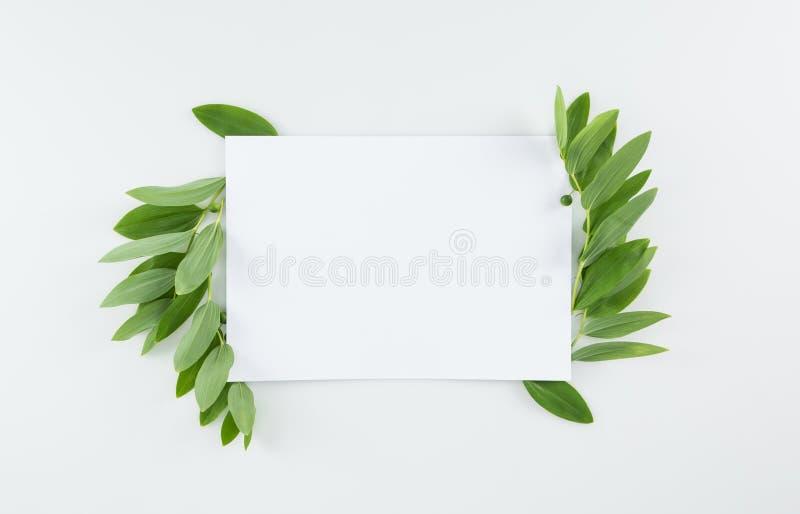 O cartão vazio com verde fresco sae no branco imagens de stock