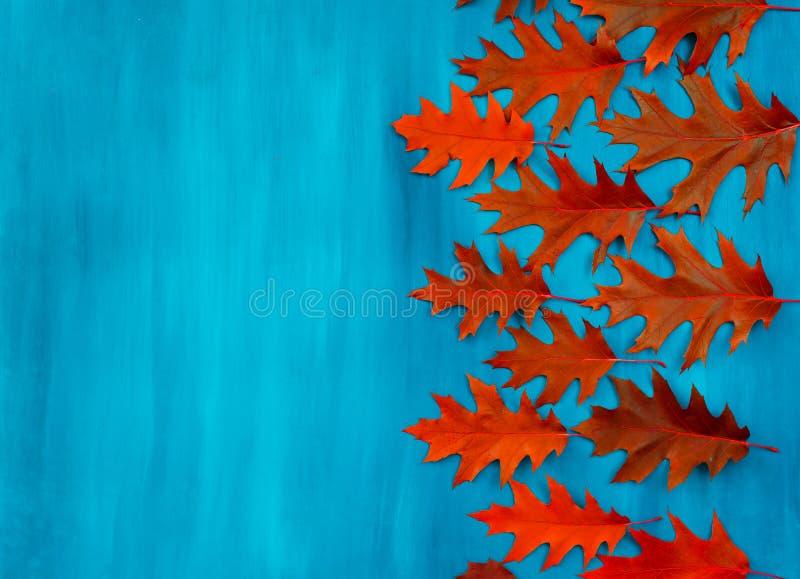 O carvalho vermelho deixa o teste padrão em um fundo azul foto de stock royalty free