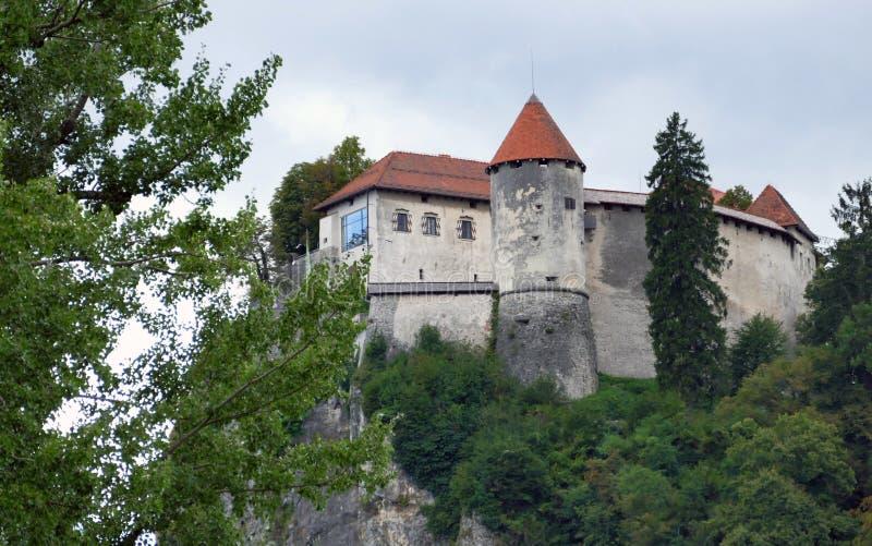 O castelo sangrado construído sobre um lago de negligência do penhasco sangrou, localizado no sangrado, Eslovênia fotografia de stock