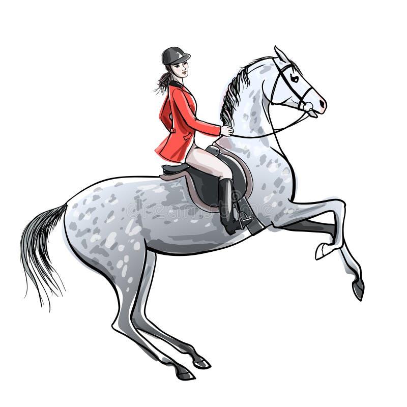 O cavaleiro bonito e dapple o cavalo cinzento no branco Menina do cavaleiro no revestimento vermelho na elevação acima do garanhã ilustração do vetor