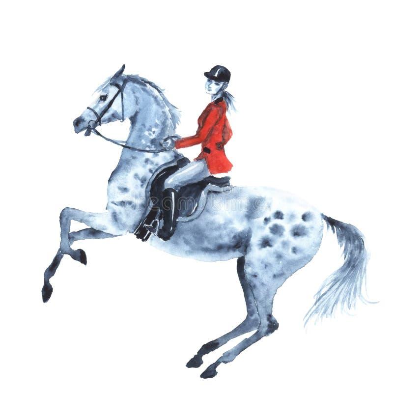 O cavaleiro da aquarela e dapple o cavalo cinzento no branco ilustração do vetor