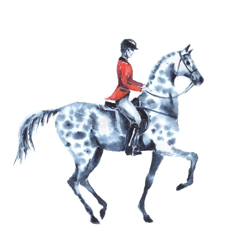 O cavaleiro da aquarela e dapple o cavalo cinzento no branco ilustração royalty free
