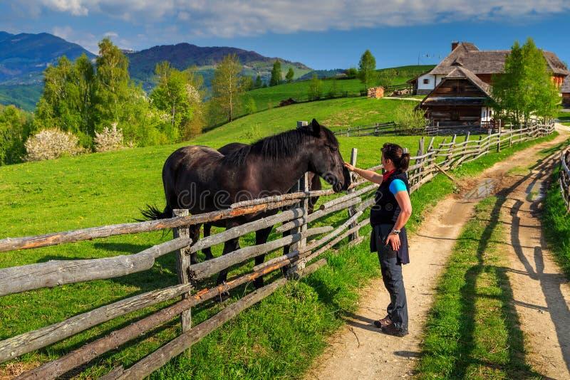 O cavaleiro da jovem mulher está acariciando seu cavalo marrom - melhores amigos fotografia de stock royalty free