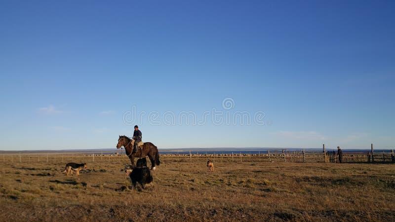 O cavaleiro do cavalo - ilha grande da terra do fogo - não - homem - terra longe da civilização foto de stock