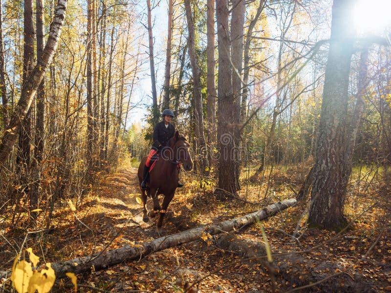 O cavaleiro no cavalo vermelho está preparando-se para saltar sobre um obstáculo imagem de stock