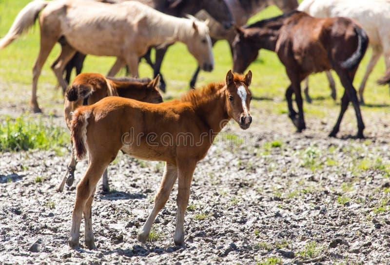 O cavalo anda no solo de argila no parque fotografia de stock