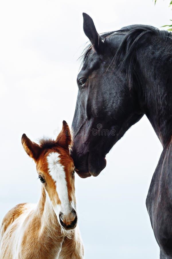 O cavalo bonito está comendo a grama no campo fotografia de stock