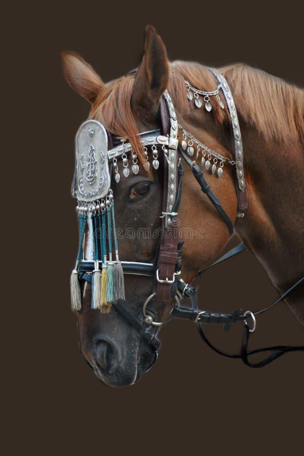 O cavalo cansado imagem de stock royalty free