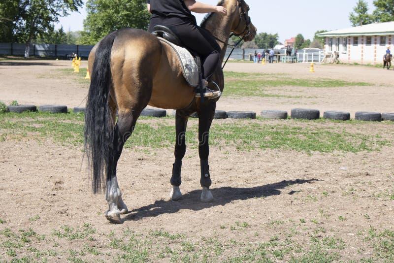 O cavalo da parte traseira, jóquei monta um garanhão, uma grama e umas rodas ao redor imagens de stock royalty free