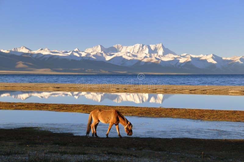 O cavalo do lago Namco