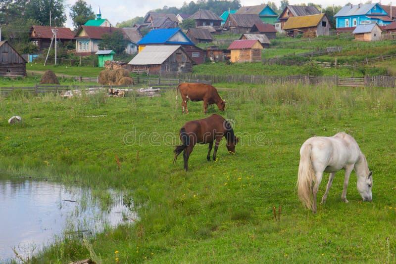 O cavalo e a vaca pastam em um prado perto da vila imagens de stock royalty free