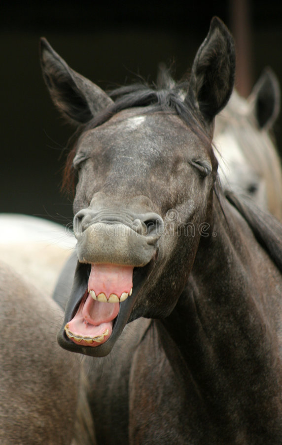 O cavalo engraçado fotos de stock