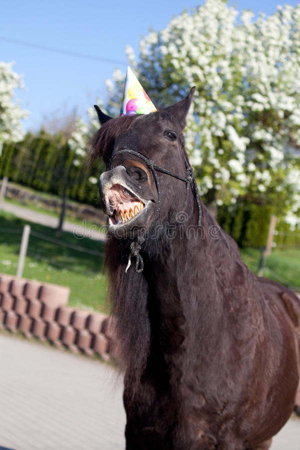 O cavalo engraçado com chapéu do partido comemora seu aniversário fotografia de stock