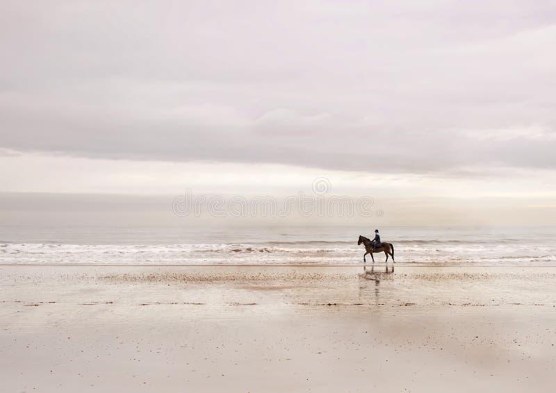 O cavalo evoluiu sobre os 45 a 55 milhão anos passados de uma criatura multi-toed pequena fotos de stock royalty free