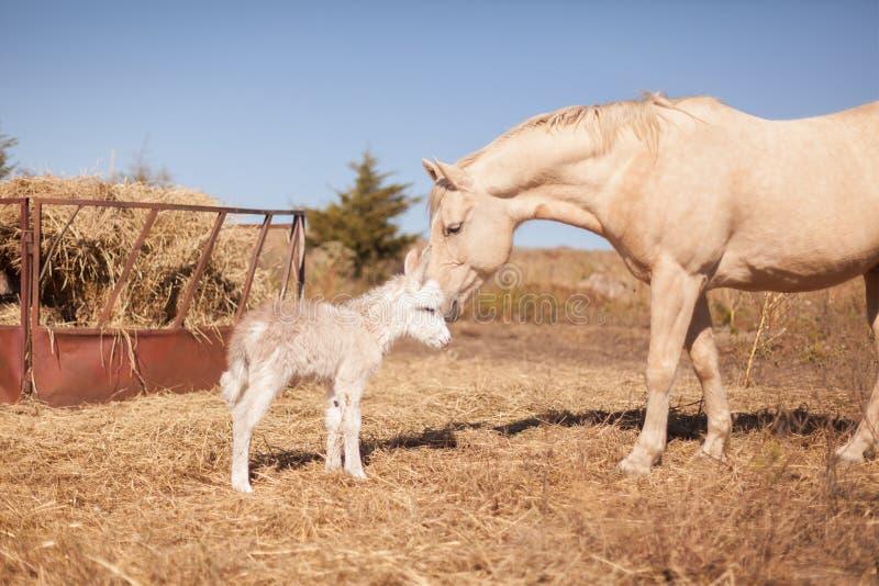 O cavalo oferece amizade ao asno recém-nascido fotografia de stock