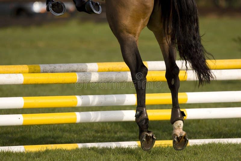 O cavalo que salta 001 imagens de stock