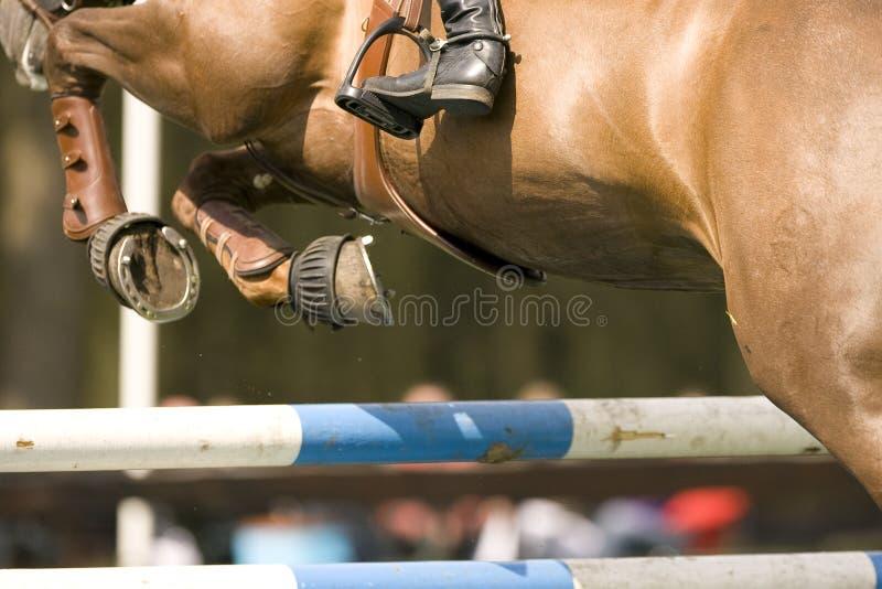 O cavalo que salta 012 foto de stock