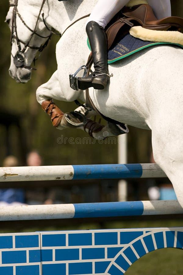 O cavalo que salta 015 imagem de stock