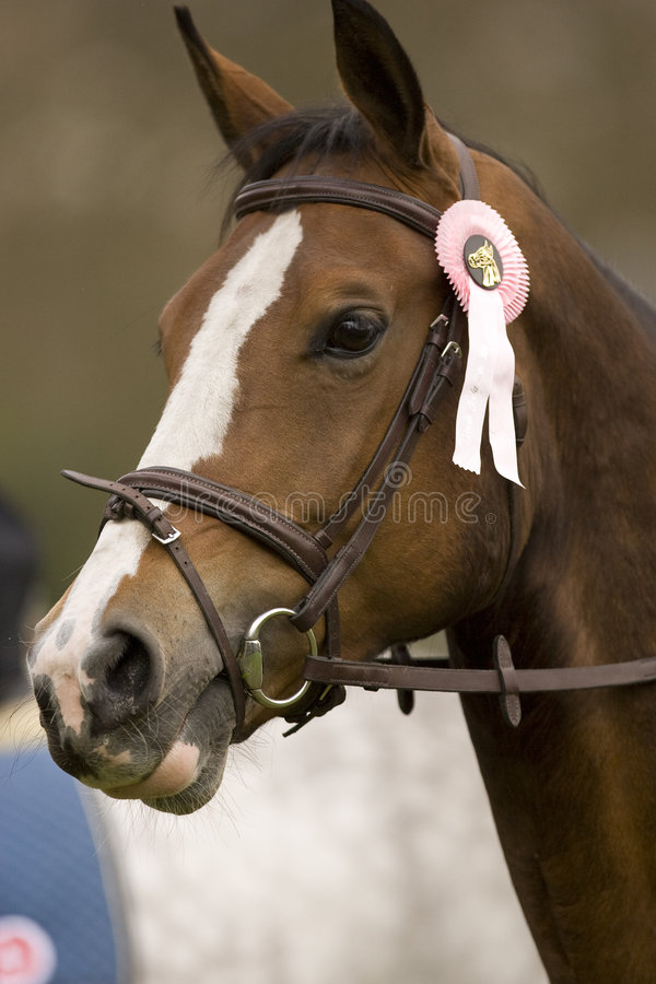 O cavalo que salta 027 imagens de stock royalty free