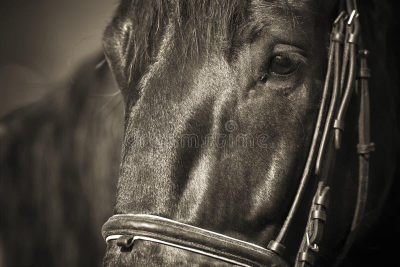 O cavalo que salta 034 imagens de stock royalty free