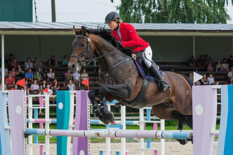 O cavalo que salta o esporte equestre em Rússia fotografia de stock