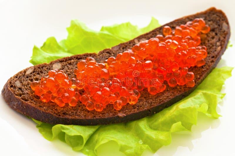 O caviar vermelho, está no pão em uma salada verde da folha imagens de stock royalty free