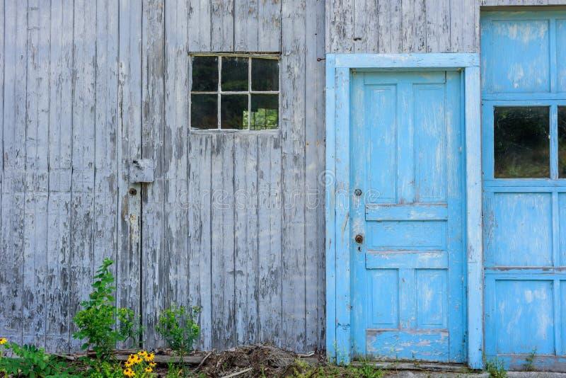 O celeiro cinzento velho rústico com azul pintou portas fotografia de stock