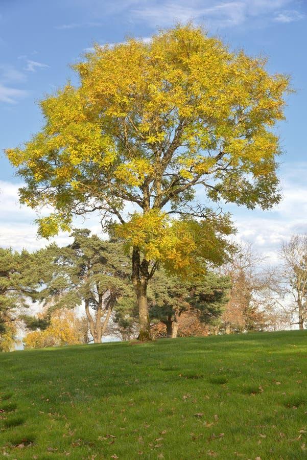 O cemitério nacional de Willamette aterra Oregon fotos de stock royalty free