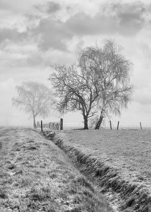 O cenário agrícola enevoado com as árvores e a vala dadas forma bonitas em um campo congelado, embaraça, Bélgica imagens de stock