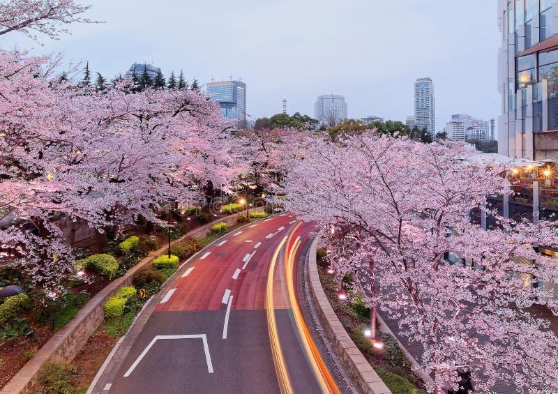 O cenário romântico da noite do namiki iluminado no Midtown do Tóquio, Roppongi de Sakura das árvores da flor de cerejeira, com t imagem de stock royalty free