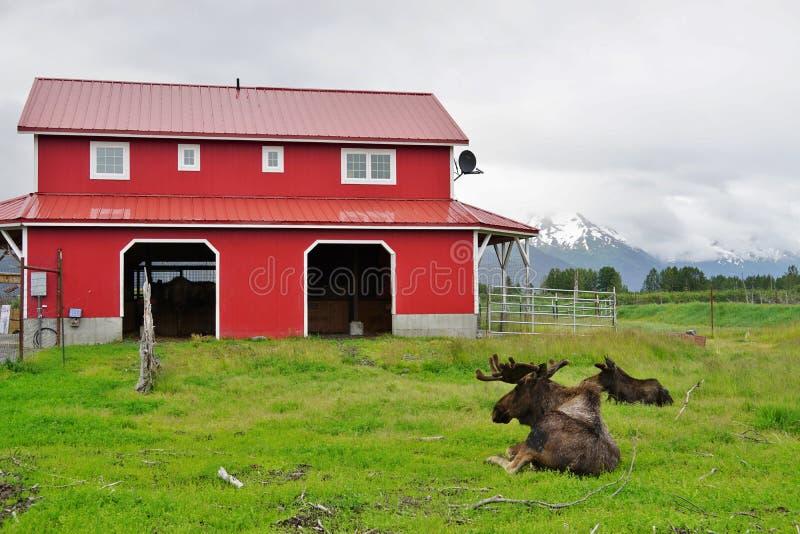O centro da conservação dos animais selvagens de Alaska imagem de stock royalty free