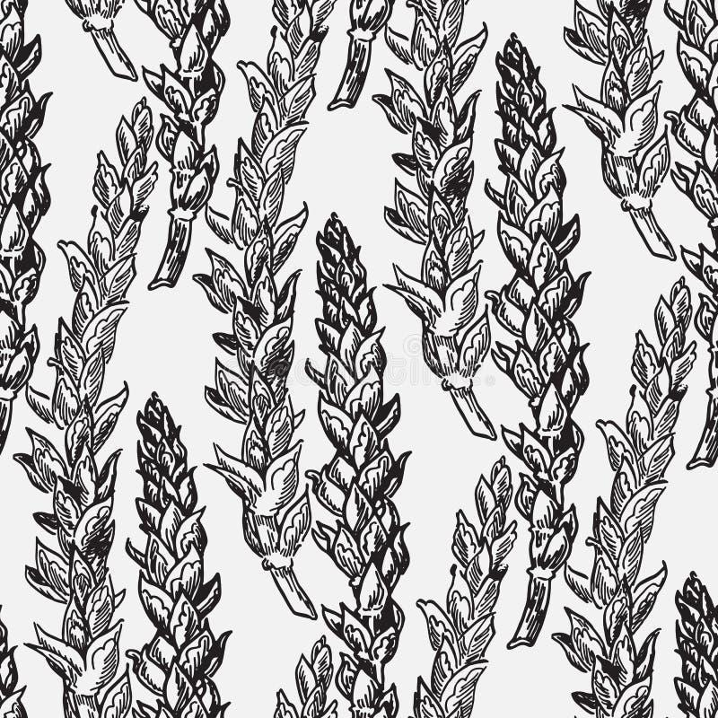 O cereal colhe esboços ilustração royalty free