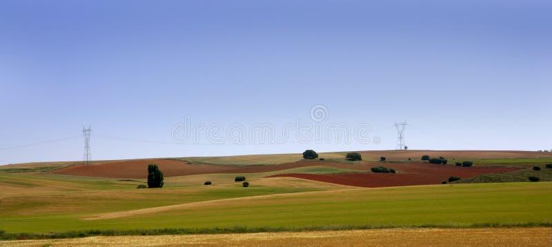 O cereal dourado e verde coloca paisagens imagens de stock royalty free
