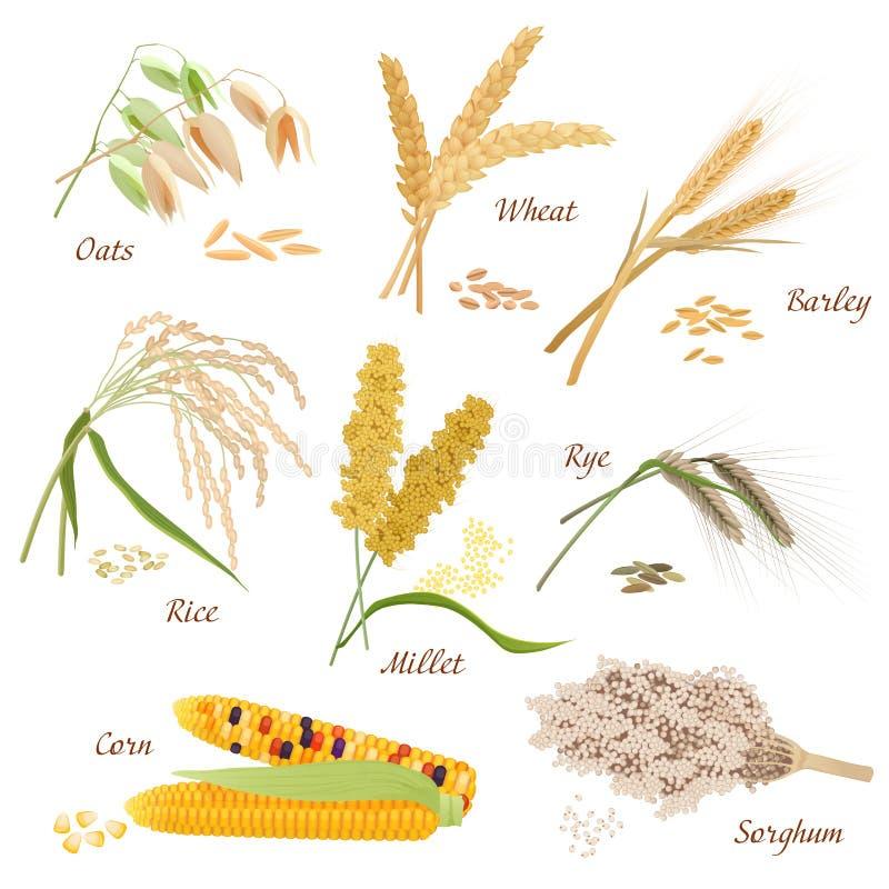 O cereal planta ilustrações dos ícones do vetor Grupo do milho do sorgo do arroz do painço do centeio da cevada do trigo da aveia ilustração do vetor