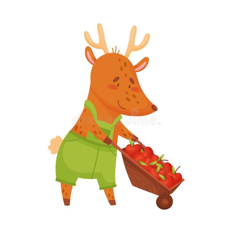 O cervo dos desenhos animados rola um carrinho de mão com maçãs Ilustra??o do vetor no fundo branco ilustração royalty free