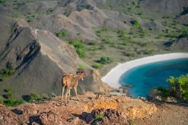 O cervo está na borda da borda No fundo há uma vista do vale com um lago fotos de stock